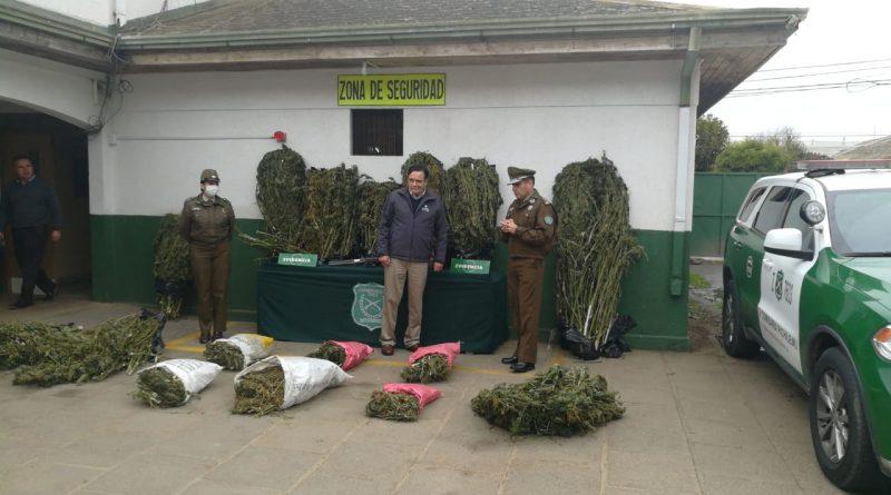 Carabineros ubica laboratorio de secado de Marihuana del tipo  Cannabis Sativa