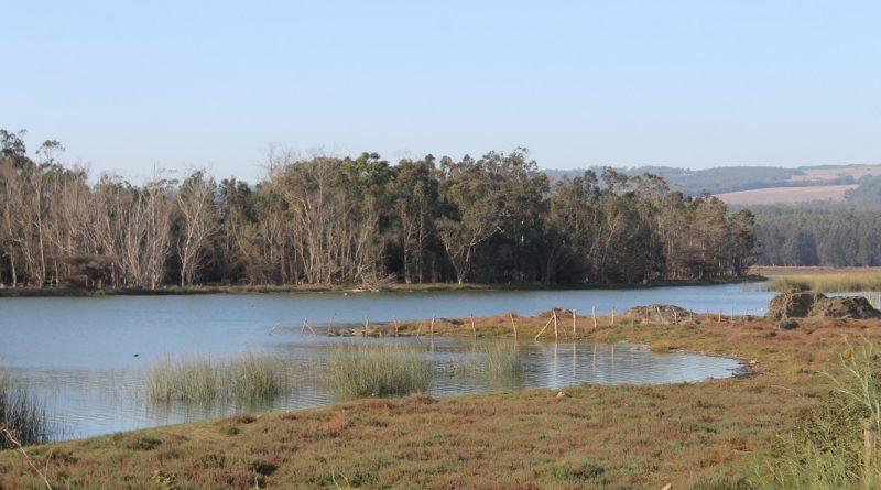 Nueva App para visitar y proteger Humedal El Petrel de Pichilemu
